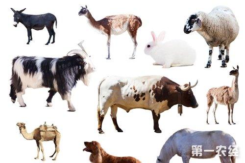 哺乳动物的特征有哪些?