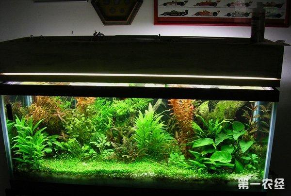 超白玻璃缸养鱼的好处?