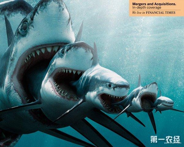 鲨鱼黑板报画法
