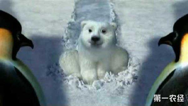 北极熊不吃企鹅?北极熊不吃君子?大象企鹅图片