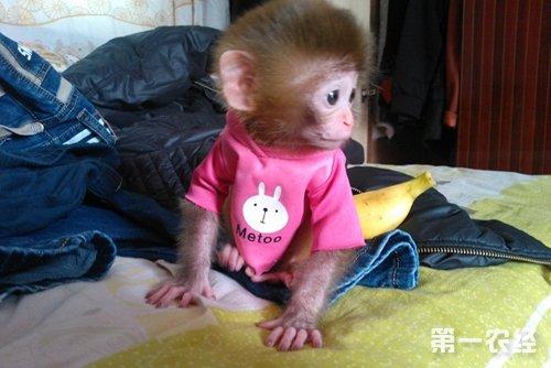 宠物猴子有哪些品种?