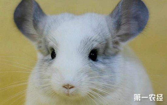 壁纸 动物 猫 猫咪 兔子 小猫 桌面 550_347