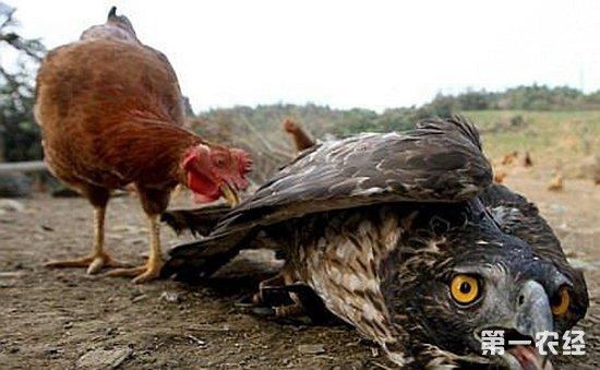 动物恐吓养殖技术