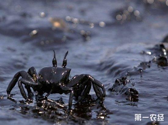 海水污染的原因