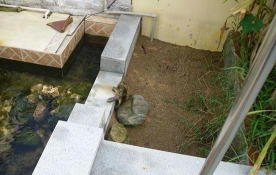 露台龟池案例(上) 龟池露台设计 龟池阳台设计
