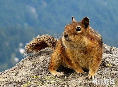 动物树叶画松鼠