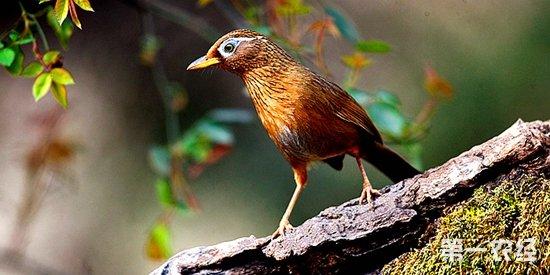 为什么野生动物保护法里没有三级保护动物?