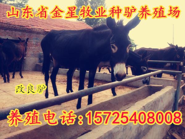 灵山致富经波尔山羊养殖场