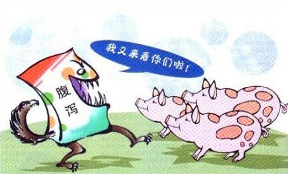 猪流行性腹泻怎么治 如何应对猪流行性腹泻