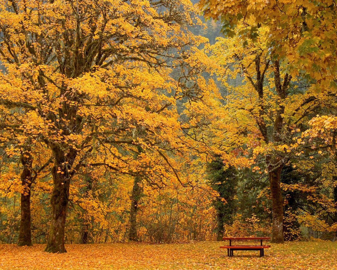 唯美秋天风景图片