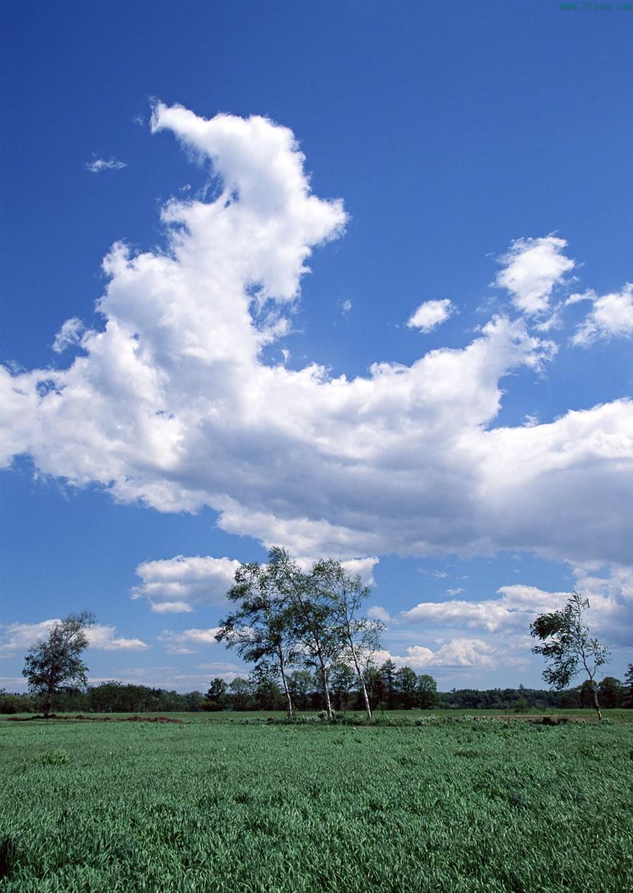 绿色植物田野素材图片