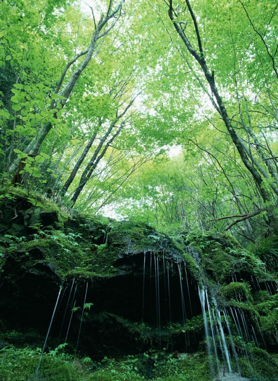 绿色树林树木图片