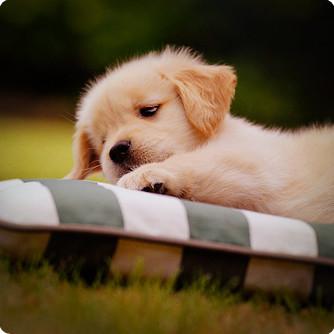 可爱狗狗头像图片