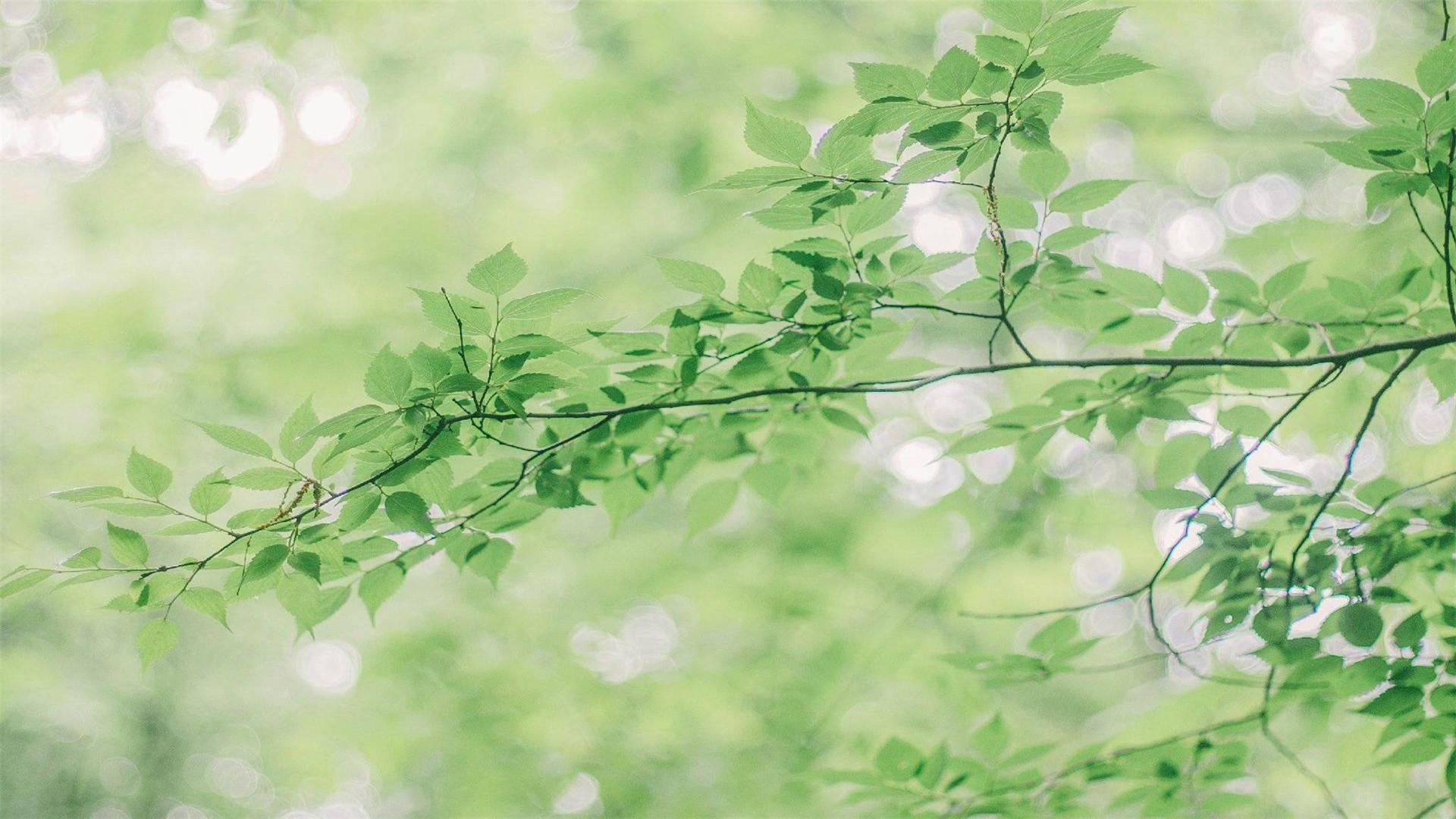 小清新绿色护眼素雅植物桌面壁纸下载