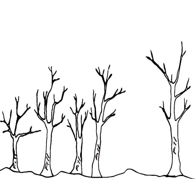 冬天枯树简笔画图片