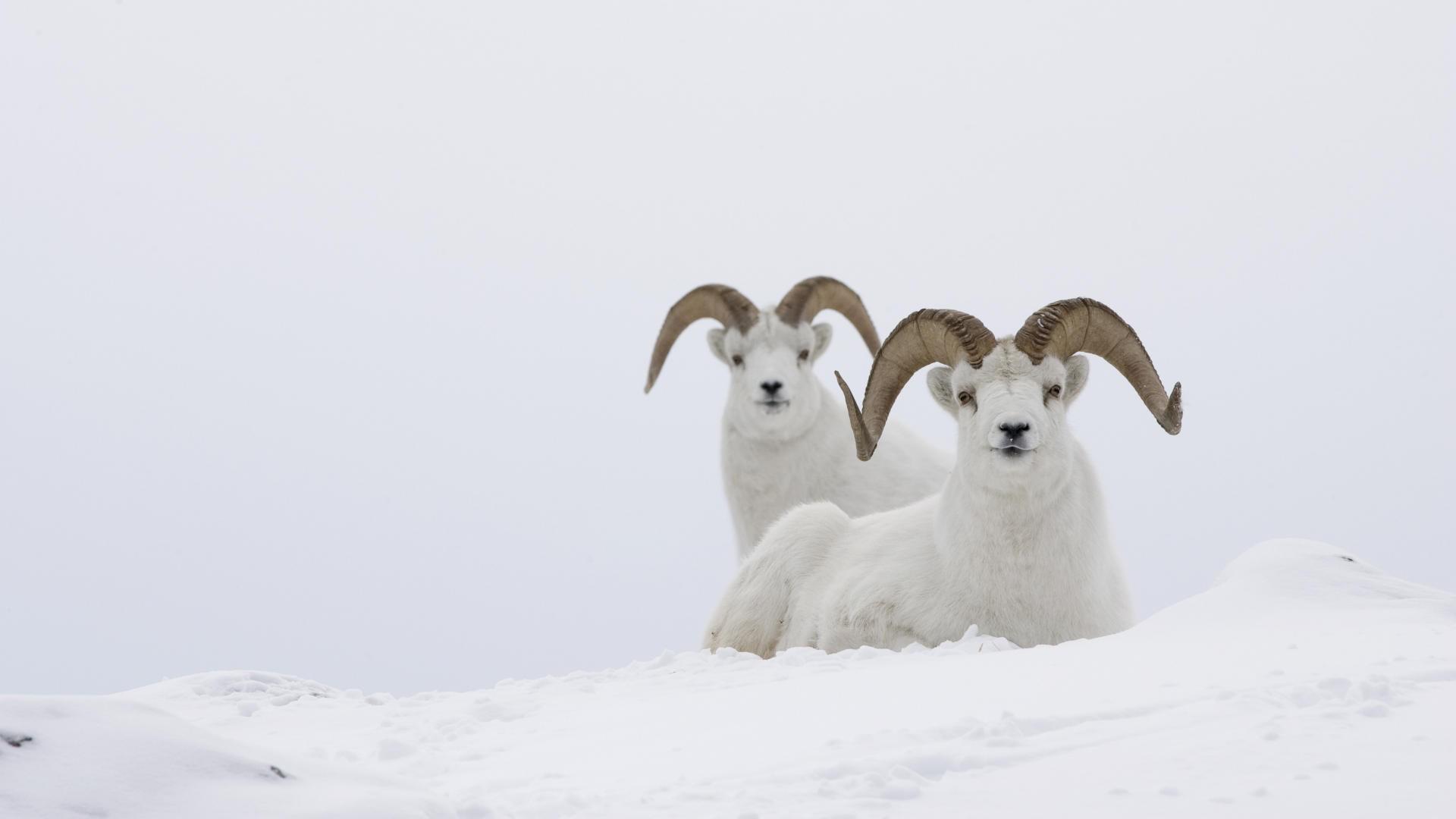 高清自然动物图片素材电脑桌面壁纸下载
