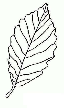 树叶简笔画:不同的叶子简笔画图片