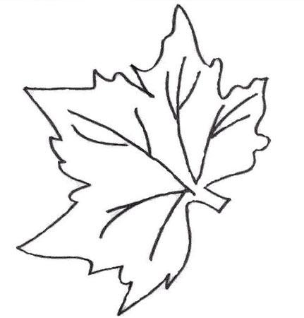各种树叶的简笔画