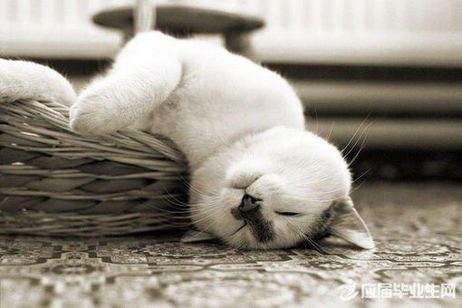 动物晚安图片大全可爱