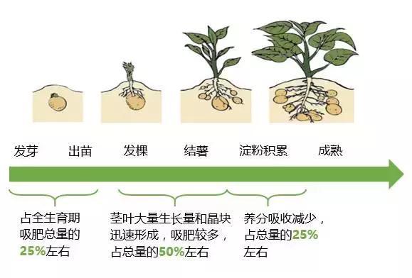 司尔特马铃薯配方肥,就是根据马铃薯生长全过程中对各种肥料的需要及图片
