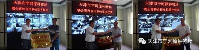 创新思路――打造宁河区――中国北方第一种猪大县