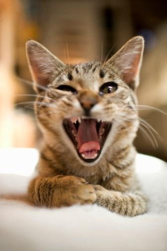 喜感大笑的动物图片_大笑图片大全_大笑表情图片_开心图片