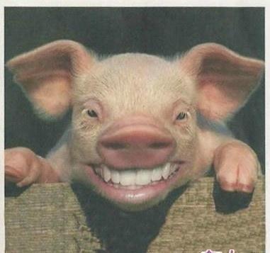 喜感大笑的动物图片_大笑图片大全_大笑表情图片_开心
