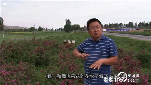 王作鵬:回鄉種玫瑰,一年賣出3000萬
