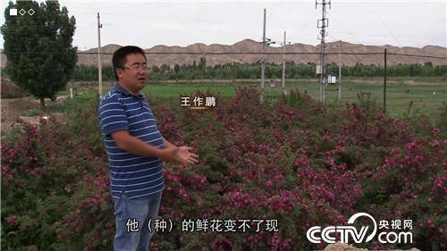 王作鹏:回乡种玫瑰,一年卖出3000万