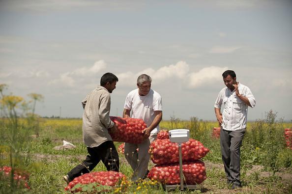 美国农民收获洋葱前做一件事,洋葱能储存更长时间