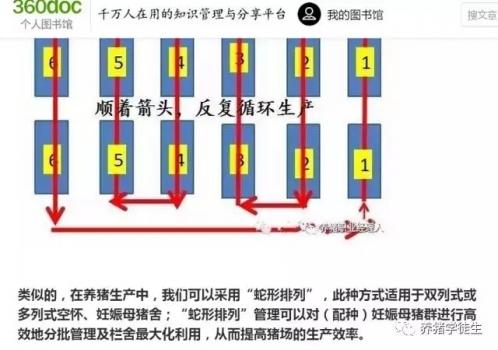 养猪技术吧:妊娠蛇形(1)