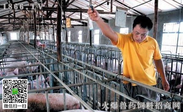 夏季怎样给母猪降温,母猪产房降温设备