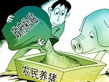 好消息!养猪人8月起可以申请养猪补贴啦!