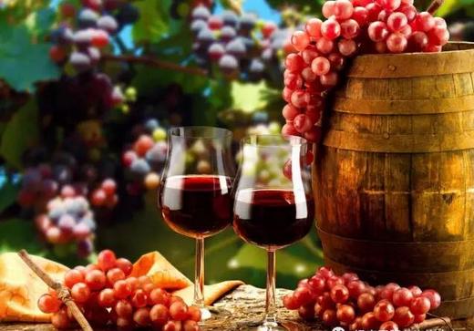 葡萄的种植技术葡萄酒美