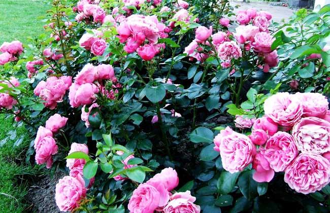 花卉以它绚丽的风采,把大自然装饰得分外美丽,给人以美的享受,养花