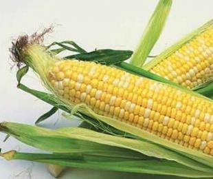 养猪的朋友,教你如何挑选安全可靠的好玉米江西养...