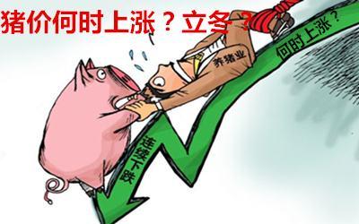 中国将进口300多亿美国农产品,发改委称猪价堪忧