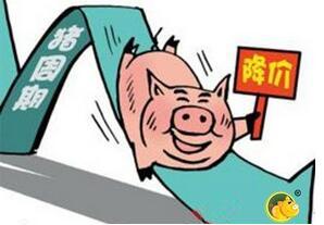 猪价周期性下跌的背景下,反弹只是季节性的……
