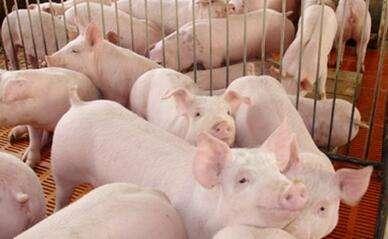 农民学养猪 猪场补贴需要什么手续