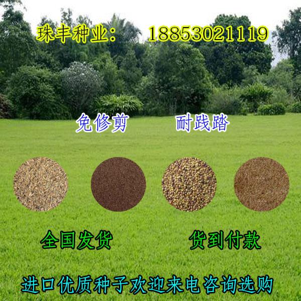 巴音郭楞现在适合种植的护坡草种子