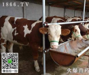 牛流行热症状,牛流行热治疗方法是什么?