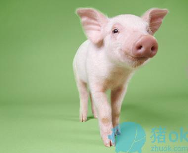 外购仔猪伤亡惨重,原因何在?如何轻松进行实效防控?