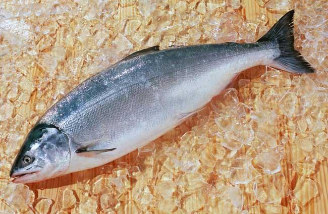 三文鱼的营养价值有哪些