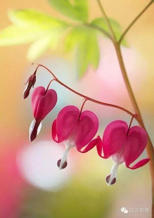 各种漂亮的花卉大全