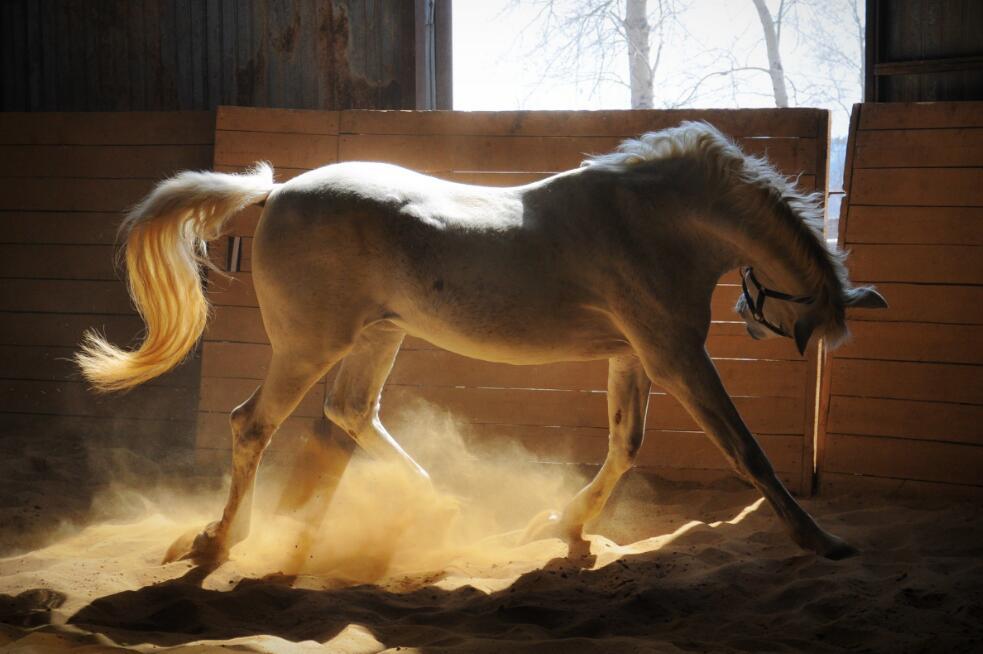 马的图片图片