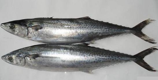 海三刀鱼_海鱼的种类图片-动物图片