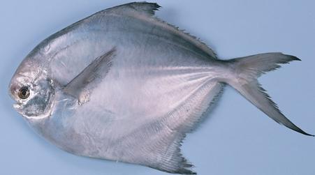 海鱼的种类图片