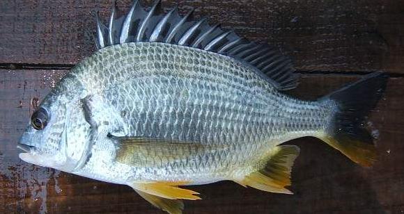 海鱼的种类图片_食用海鱼的种类图片_海鱼的种类图片