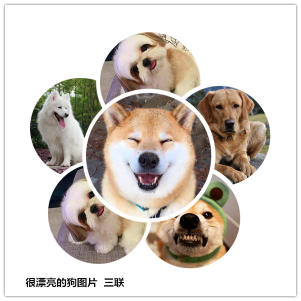 狗漂亮_很漂亮的狗图片