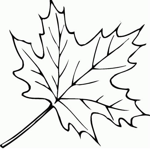 树叶简笔画_秋天的树叶简笔画_好看的树叶简笔画_树叶图片